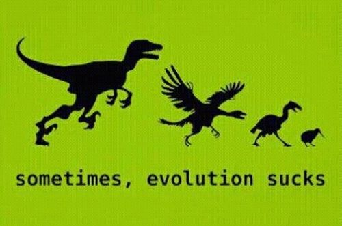 Name:  Evolution.jpg Views: 2535 Size:  23.1 KB